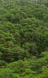 Floresta do pinheiro em Dalat, Vietname Fotos de Stock