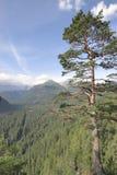 Floresta do pinho de Highmountain Imagens de Stock Royalty Free