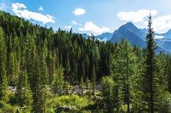 A floresta do pinho do verão e a montanha nebulosa do céu azul ajardinam Foto de Stock