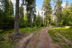 Floresta do pinho e fuga de caminhada nas montanhas Foto de Stock Royalty Free