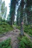 Floresta do pinho e fuga de caminhada nas montanhas Fotos de Stock