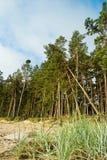 Floresta do pinho em costas do mar Báltico foto de stock