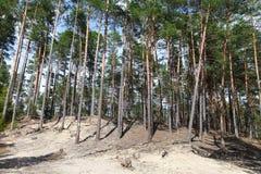Floresta ensolarada do verão Imagem de Stock Royalty Free