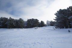 Floresta do pinho do inverno no terreno nevado, montanhoso imagens de stock royalty free