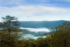 Floresta do pinho na manhã Imagens de Stock