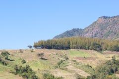 Floresta do pinho na montanha Imagens de Stock Royalty Free