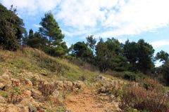 Floresta do pinho na rocha na costa de mar do adriático (Montenegro, inverno) Fotografia de Stock Royalty Free