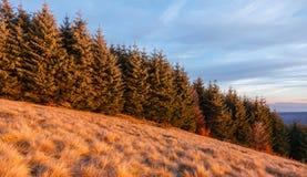 Floresta do pinho na Transilvânia imagens de stock