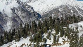 Floresta do pinho nas montanhas filme