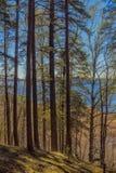 Floresta do pinho no fundo do lago fotografia de stock royalty free