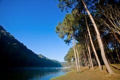 Floresta do pinho no lago Foto de Stock Royalty Free