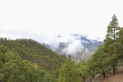 Floresta do pinho do verde de Santa Cruz de Tenerife imagens de stock royalty free