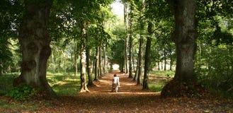 Floresta do pram da mulher Fotos de Stock Royalty Free