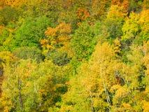 Floresta do russo Imagens de Stock Royalty Free