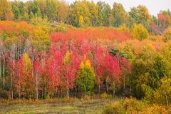 Floresta do russo na queda fotos de stock