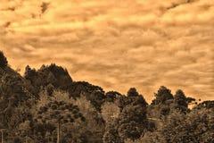 Floresta do Sepia fotografia de stock