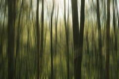 Floresta do sumário de Greeen Foto de Stock