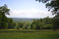 Floresta do vale verde Imagens de Stock