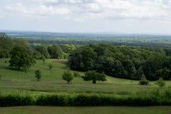 Floresta do vale verde Imagem de Stock