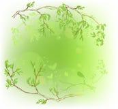 Floresta do verão Imagem de Stock Royalty Free