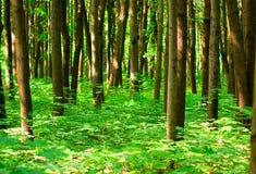 Floresta do verão Foto de Stock Royalty Free