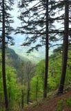 Floresta do verão e névoa densa sobre o vale Imagem de Stock Royalty Free