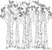 Floresta do vidoeiro ilustração stock