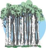 Floresta do vidoeiro ilustração royalty free