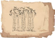 Floresta do vidoeiro ilustração do vetor