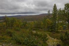 Floresta do vidoeiro com lago fotos de stock