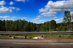 Floresta do vidoeiro da janela de carro contra o céu azul imagens de stock royalty free