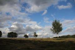 Floresta do vidoeiro do prado do dia de verão Fotografia de Stock Royalty Free