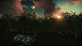 Floresta do vidoeiro no por do sol, levantamento da câmera ilustração stock