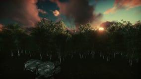 Floresta do vidoeiro no por do sol, passagem dos aviões ilustração do vetor