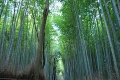 Floresta dos bambus em Kyoto, Japão imagem de stock royalty free