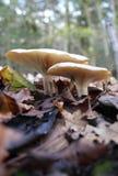 Floresta dos fungos Imagem de Stock
