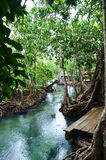 Floresta dos manguezais com a associação natural clara Imagens de Stock Royalty Free