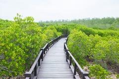 Floresta dos manguezais com madeira Fotos de Stock Royalty Free