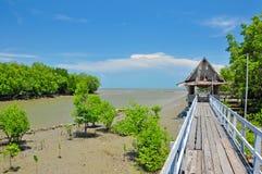 Floresta dos manguezais e pavilhão de madeira Imagens de Stock