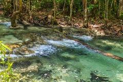 Floresta dos manguezais em Krabi em Tailândia Fotografia de Stock