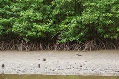 Floresta dos manguezais em Tailândia fotografia de stock