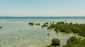 Floresta dos manguezais em um recife de corais Filipinas, Palawan video estoque