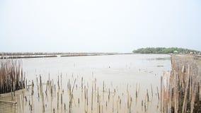 Floresta dos manguezais ou floresta Intertidal em Bangkhunthein em Banguecoque Tailândia vídeos de arquivo