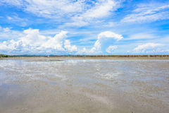 Floresta dos manguezais, praia, mar e céu azul na conserva de natureza e imagem de stock royalty free