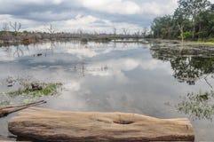 Floresta dos pantanais em Camboja Foto de Stock