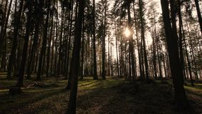 Floresta dos pinhos filme