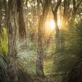 Floresta dourada Fotografia de Stock Royalty Free
