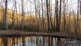 Floresta dourada Imagens de Stock