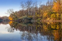 Floresta dourada do outono sobre o rio fotos de stock