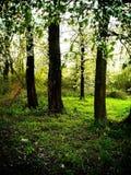Floresta durante o dia ensolarado 2 fotos de stock royalty free
